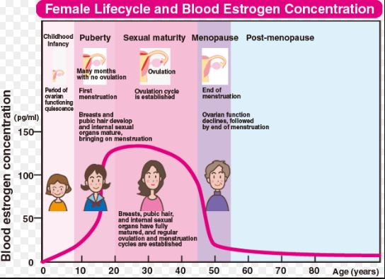 estrogen-levels-and-deficiency-against-age